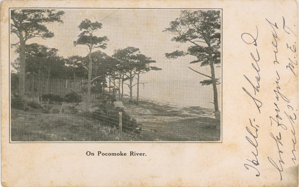 Pocomoke River Post Card